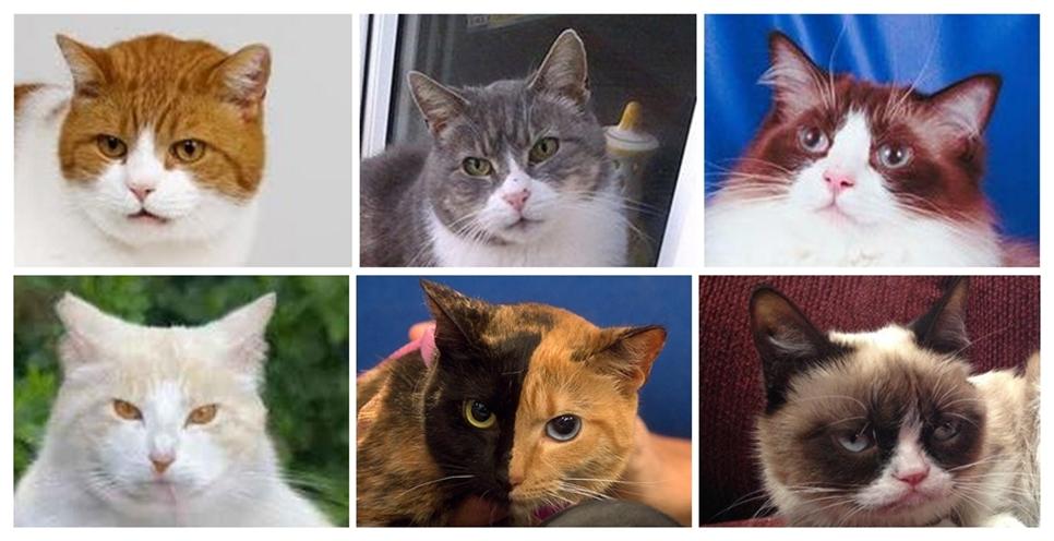 A tarka macska szerencsét hoz, a sziámi vagyont és sikert! Nézd meg, macskád színe mit jelent számodra