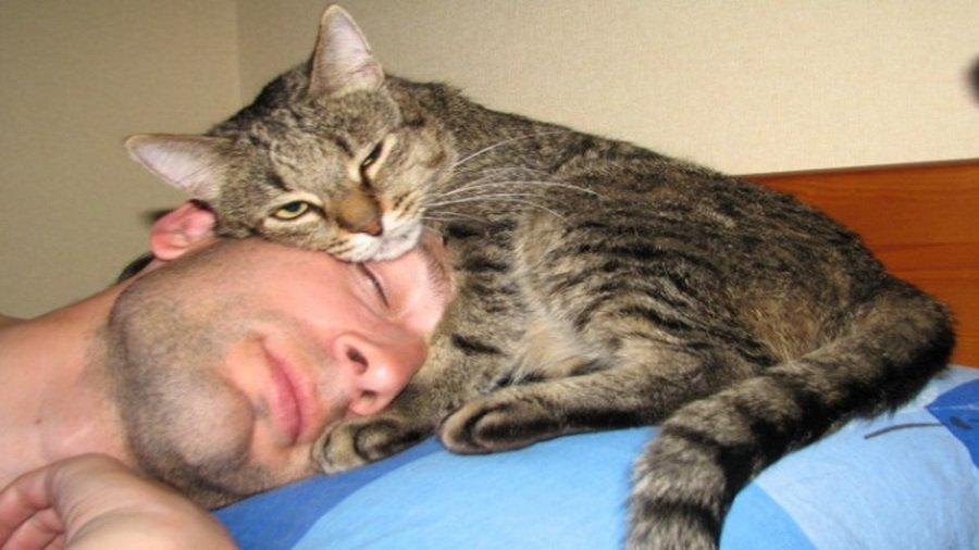10 szokatlan jel, amely arra utal, hogy a macskád szeret téged